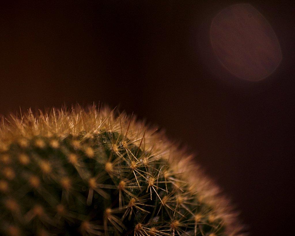 Sonne über Dornenwüste