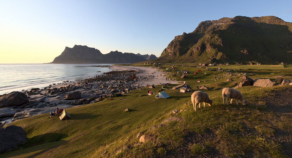 Midnight sun with sheep